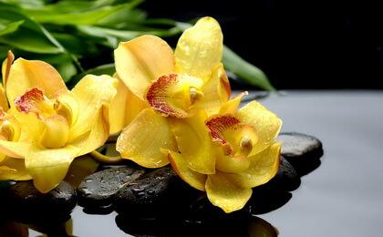 simvol-orhidei-2