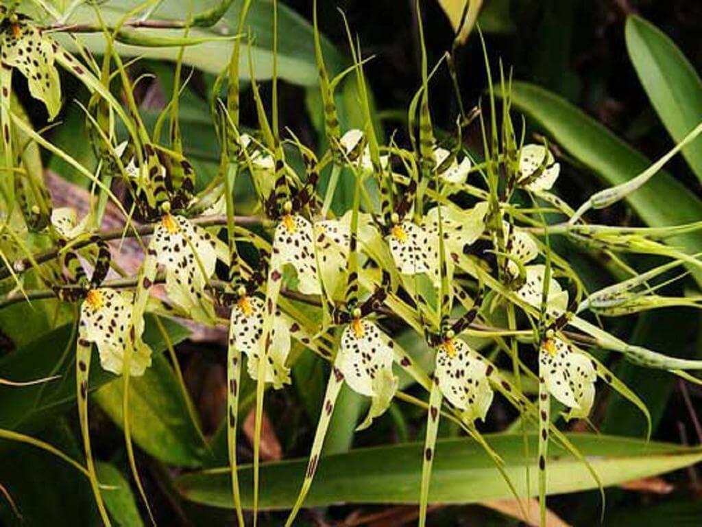 Основные роды орхидей 4