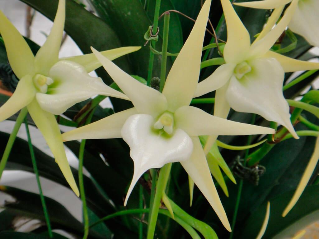 Основные роды орхидей 2