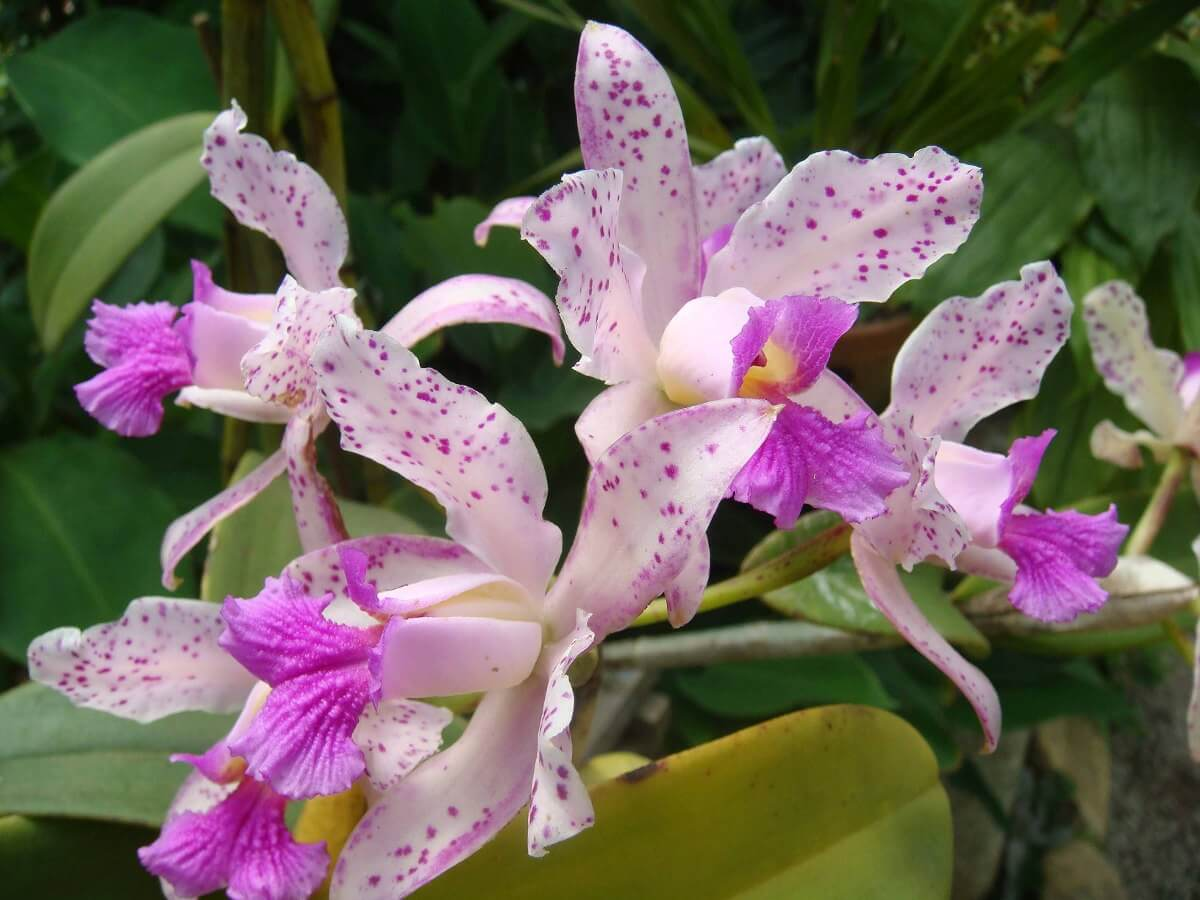 Основные роды орхидей 48
