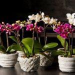 kak-vybrat-orchids-1