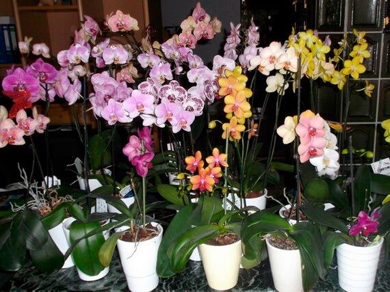 kak-vybrat-orchids-2
