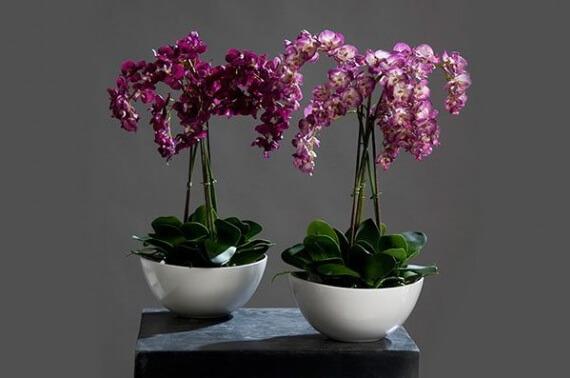 kak-vybrat-orchids-3